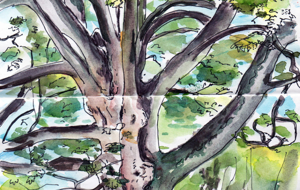 Tree in the park in pen, ink and watercolour