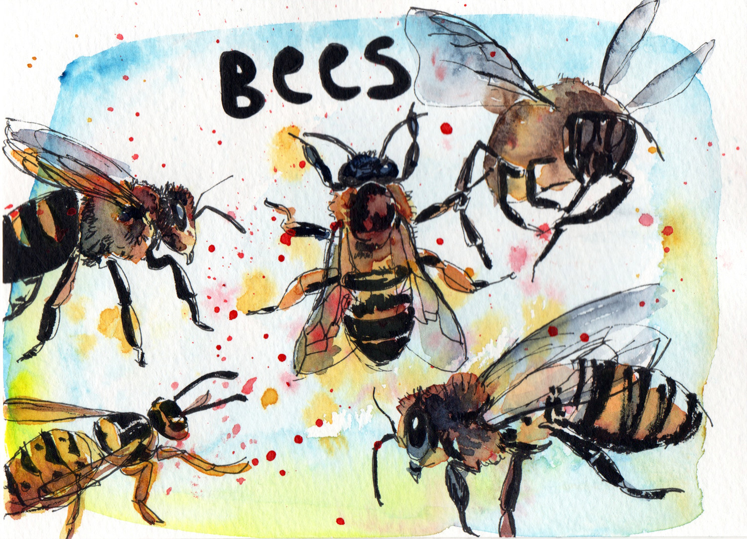 Daily Drawings Bees in Pen and Watercolour by Sophie Peanut