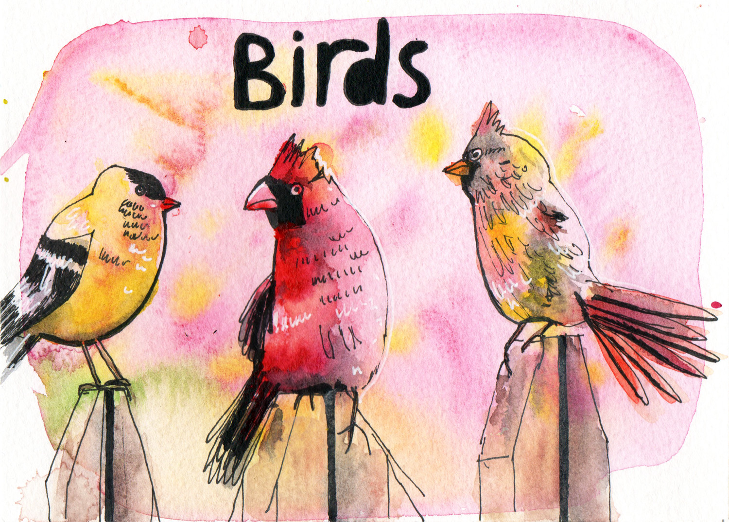 Birds in Pen and Watercolour Daily Drawings by Sophie Peanut