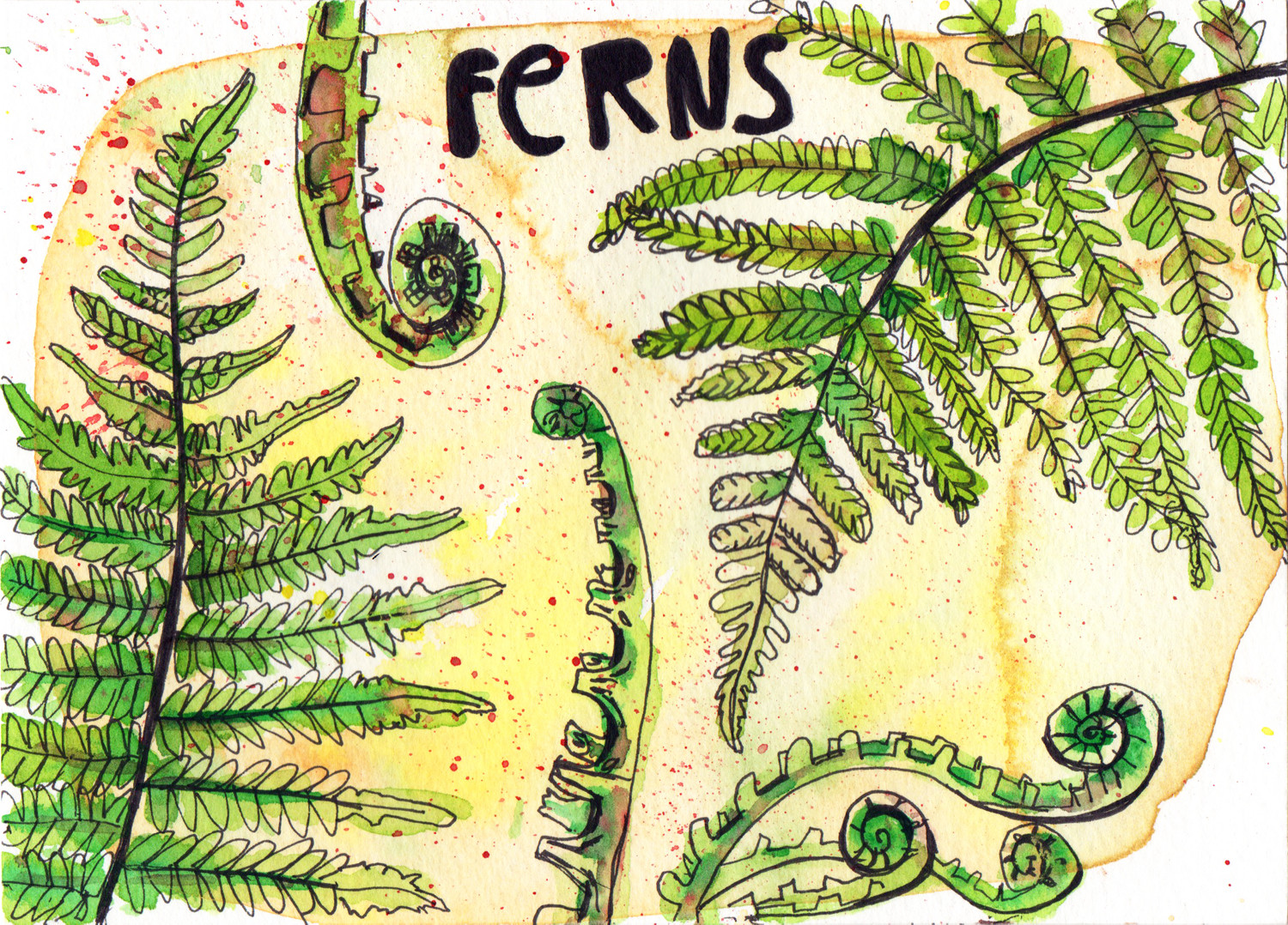 Ferns in Pen and Watercolour Daily Drawings by Sophie Peanut
