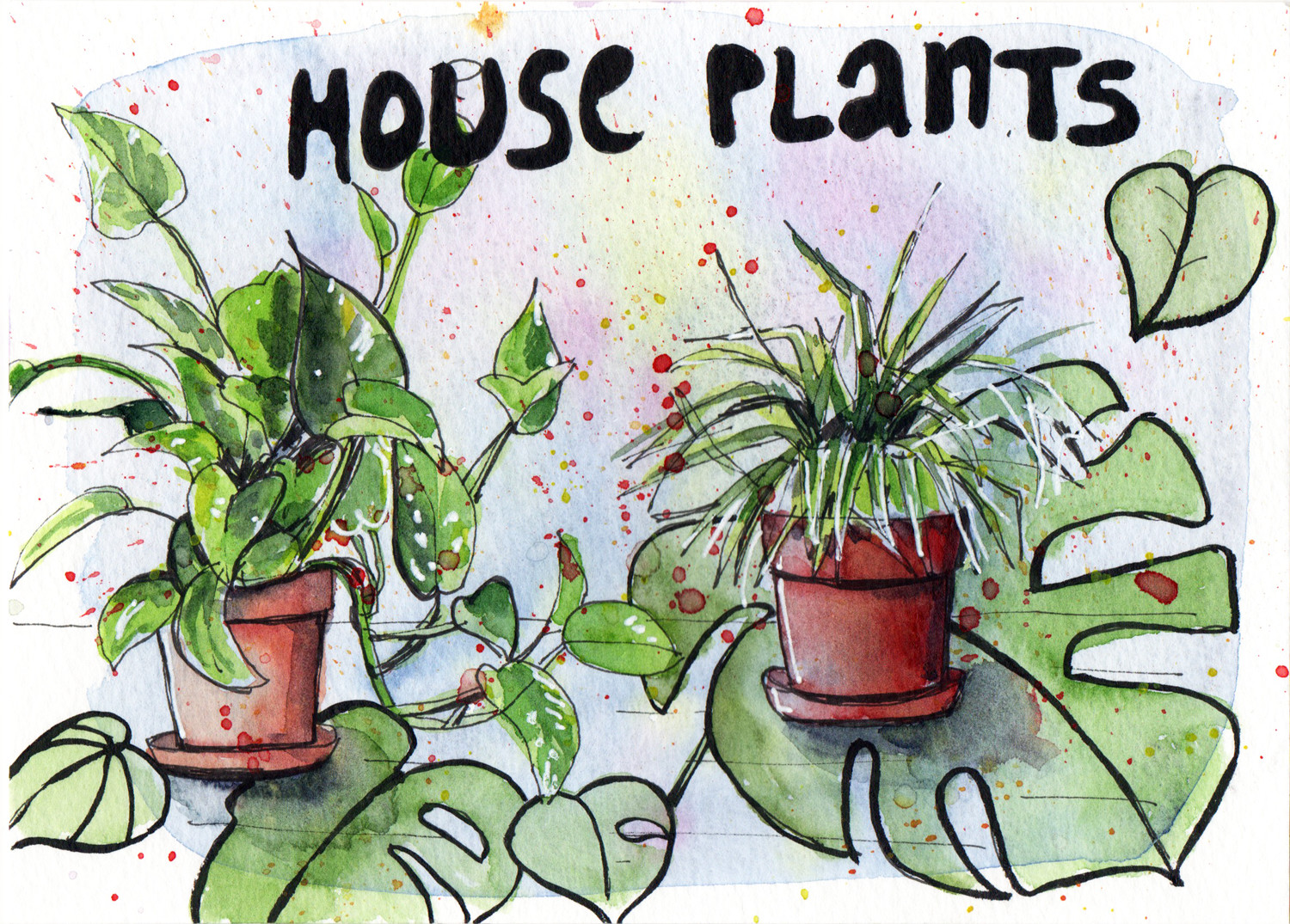 Daily Drawings House Plants in Pen and Watercolour by Sophie Peanut