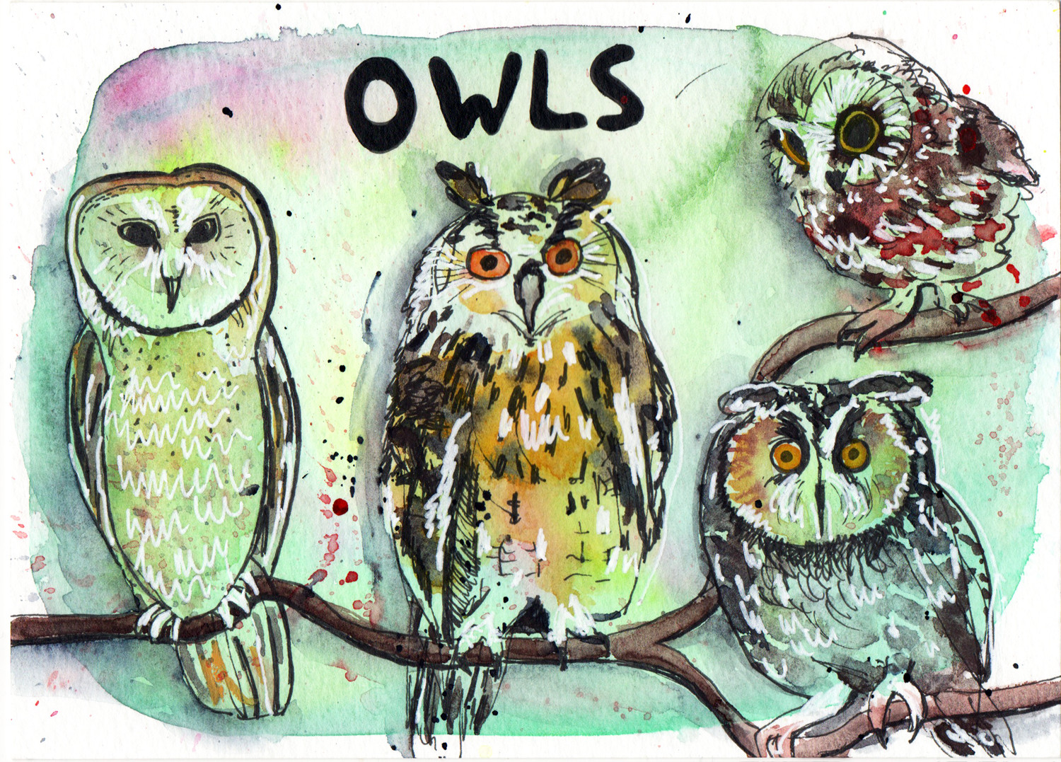 Owls in Pen and Watercolour Daily Drawings by Sophie Peanut