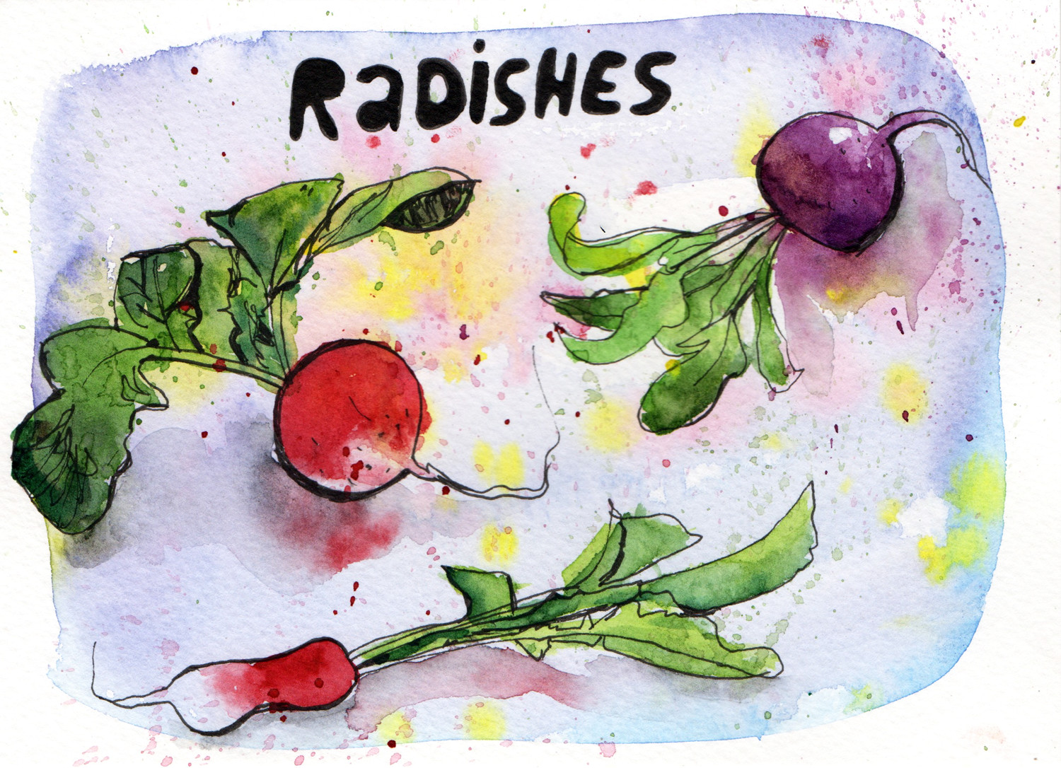Daily Paintings by Sophie Peanut - Radishes in pen and watercolour