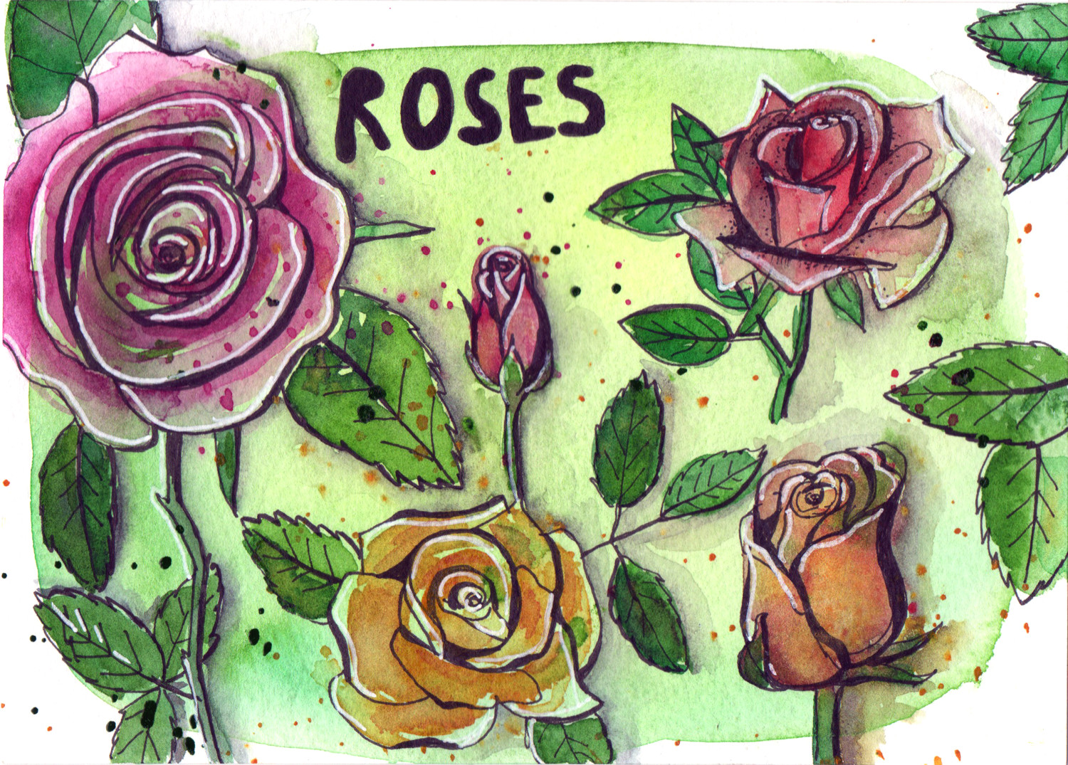 Daily drawings in Pen and Watercolour Roses by Sophie Peanut