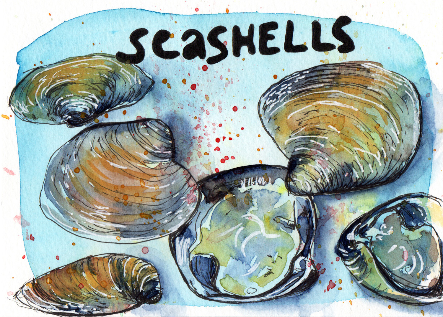 Daily Drawings Seashells in Pen and Watercolour by Sophie Peanut