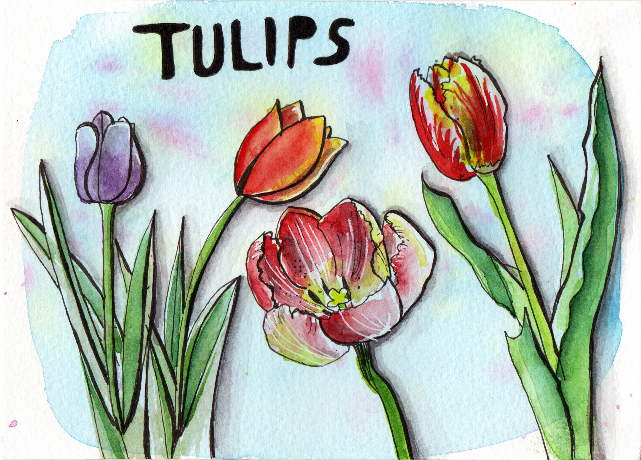 Daily drawings in Pen and Watercolour Tulip by Sophie Peanut