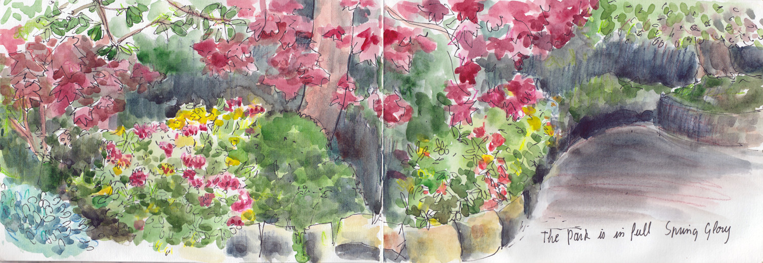 Spring flowers drawing of rhododendrons in pen and watercolour by Sophie Peanut
