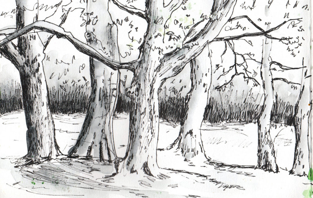 Spring drawing of Trees by Sophie Peanut
