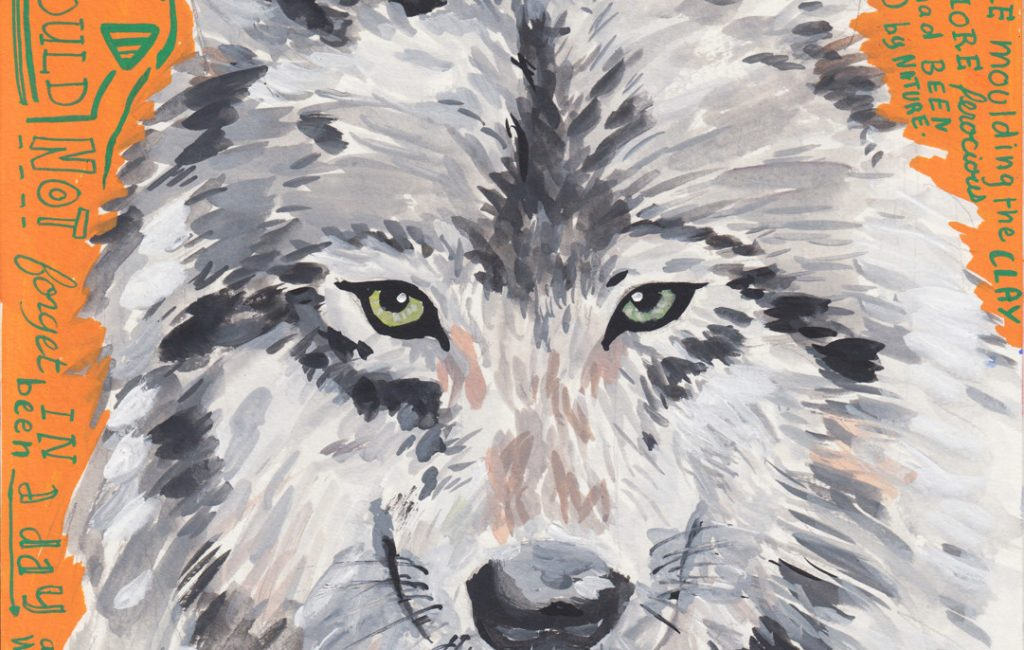 White Fang Drawing by Sophie Peanut